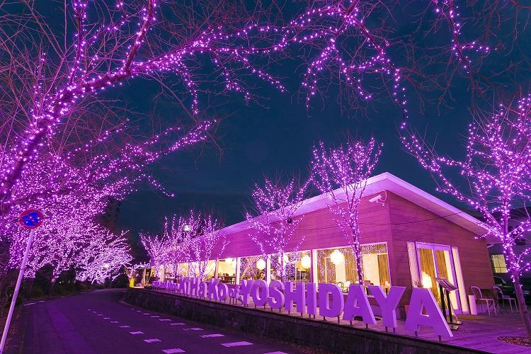吉田屋冬桜イルミネーション2018
