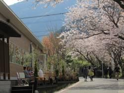 café & shop KiHaKo「嬉箱」テラスで春のスイーツを楽しみませんか☆