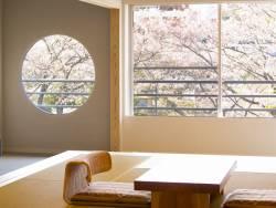 【客室:葵】お部屋の窓からも一面に桜を見ることができます。まるで窓辺の絵画のよう…。