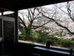 『足湯Barクロニクルテラス』足湯を楽しみながら桜も満喫できます♪
